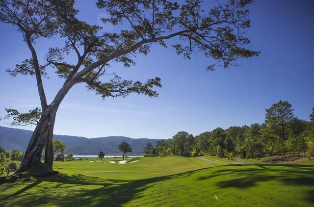 Cây lớn trong sân golf