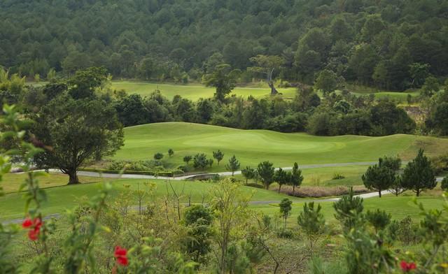 Rừng thông bao quanh sân golf Đà Lạt 1200