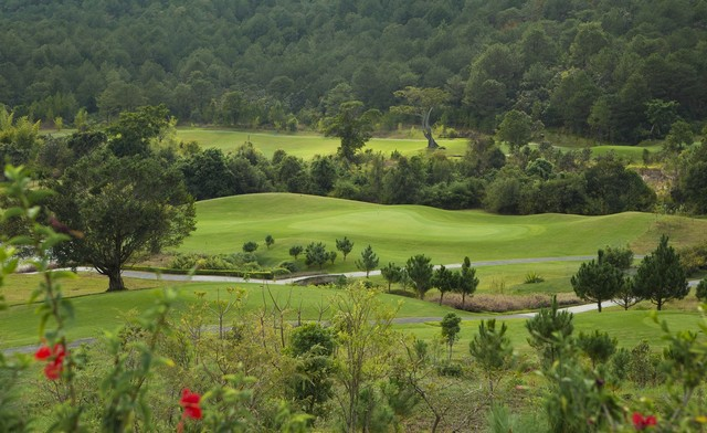 Pine forest at Dalat 1200 golf course